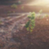 biology-blur-close-up-822474.jpg