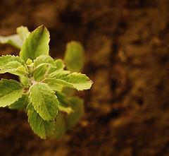 blur-botanical-close-up-250646.jpg