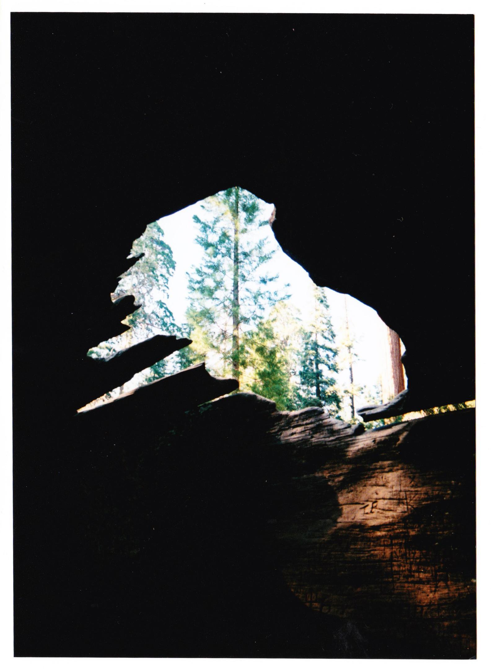 Redwood | California | 2017