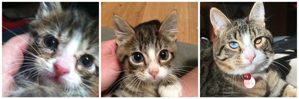 Little Meow