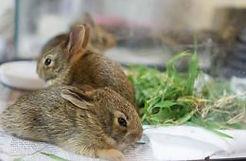 rabbit-e1476317642760.jpg