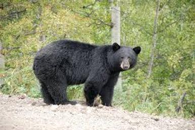 Bear Level Donation