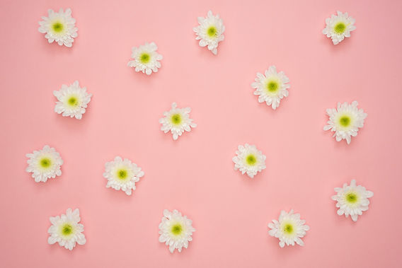white-and-yellow-flower-on-pink-wall-103