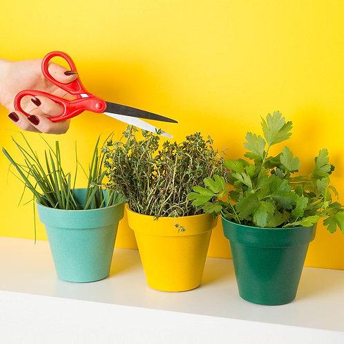 Trio de plantes aromatiques