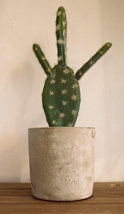 Cactus avec pot en ciment