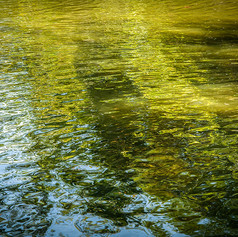 Lake Ripples VI
