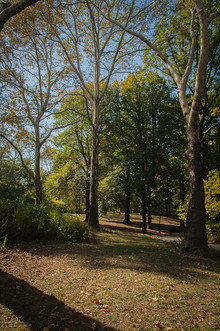 A Walk Among the Trees III