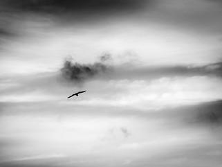 Soar (in Black & White)
