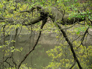 Branches over The Lake - Central Park
