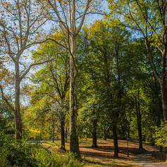 A Walk Among The Trees I