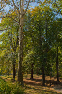 A Walk Among the Trees II
