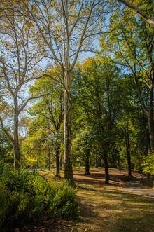 A Walk Among the Trees