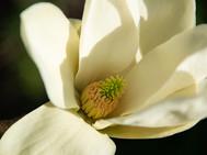 Unknown Flower Closeup