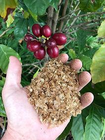 chaff coffee berry.jpg