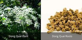 All-Natural-PMS-Treatment-Dong-Quai.jpg