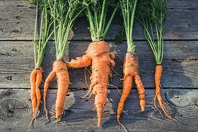 Las zanahorias orgánicas
