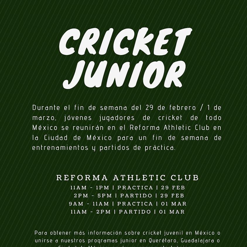 Taller de Cricket Junior