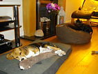 Cookridge Canine Care well behaved dogs relaxing