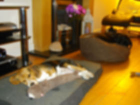 Cookridge Canine Care inside the house