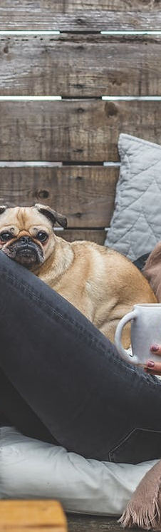 people drink coffee with dog free from p
