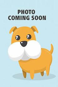 Dog_photo_coming_soon-0001.jpg