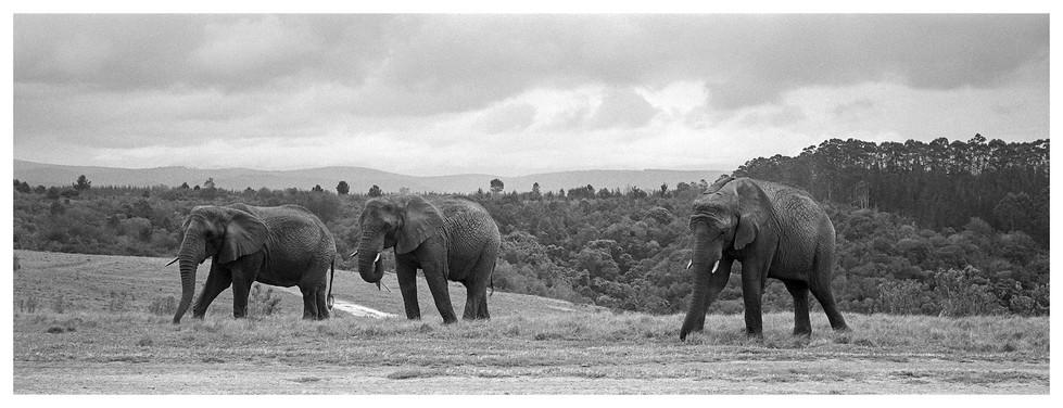 Südafrika 4K_38.JPG