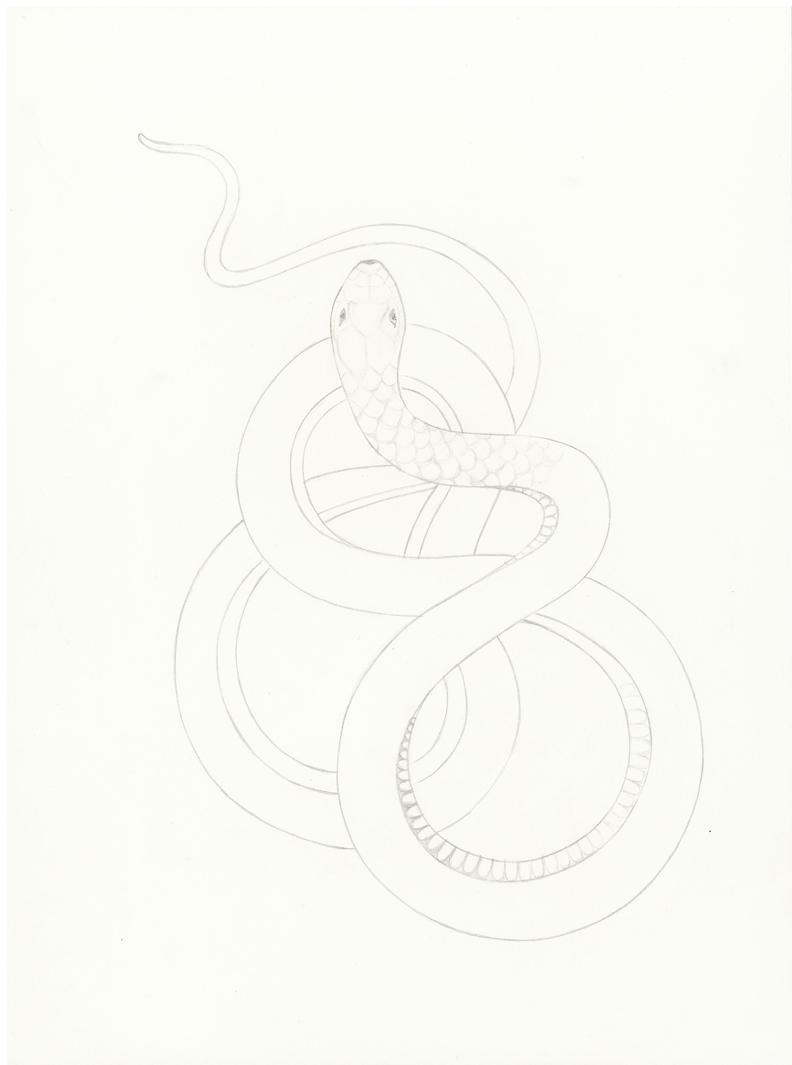 Dessin poignee serpent