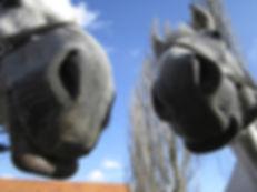 horses-2501568_1920.jpg