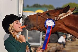 horse-934534_1280.jpg