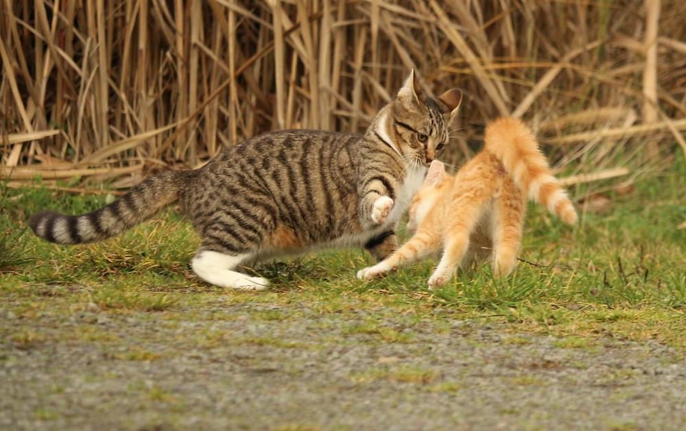 Faça como o gato repreenda seu amigo machista