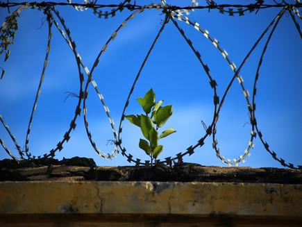 Redução da maioridade penal?