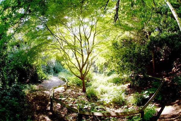 Branksome Park Woods