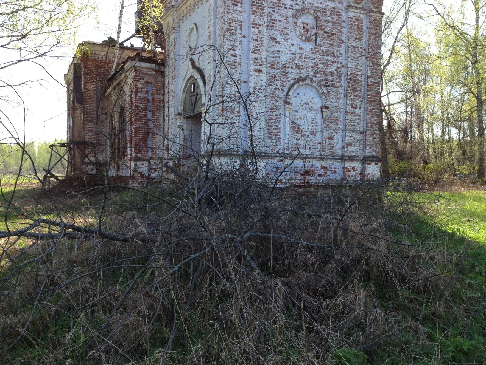 Кусты и деревья в фундаменте