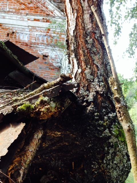 Сложное дерево