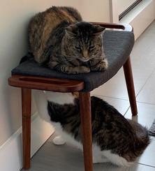 Ellen watching stupid cat tricks
