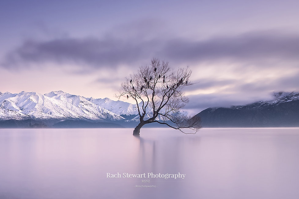 Winter Wanaka tree sunrise