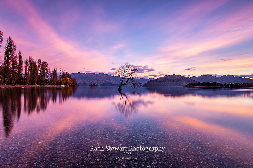 The Wanaka Tree