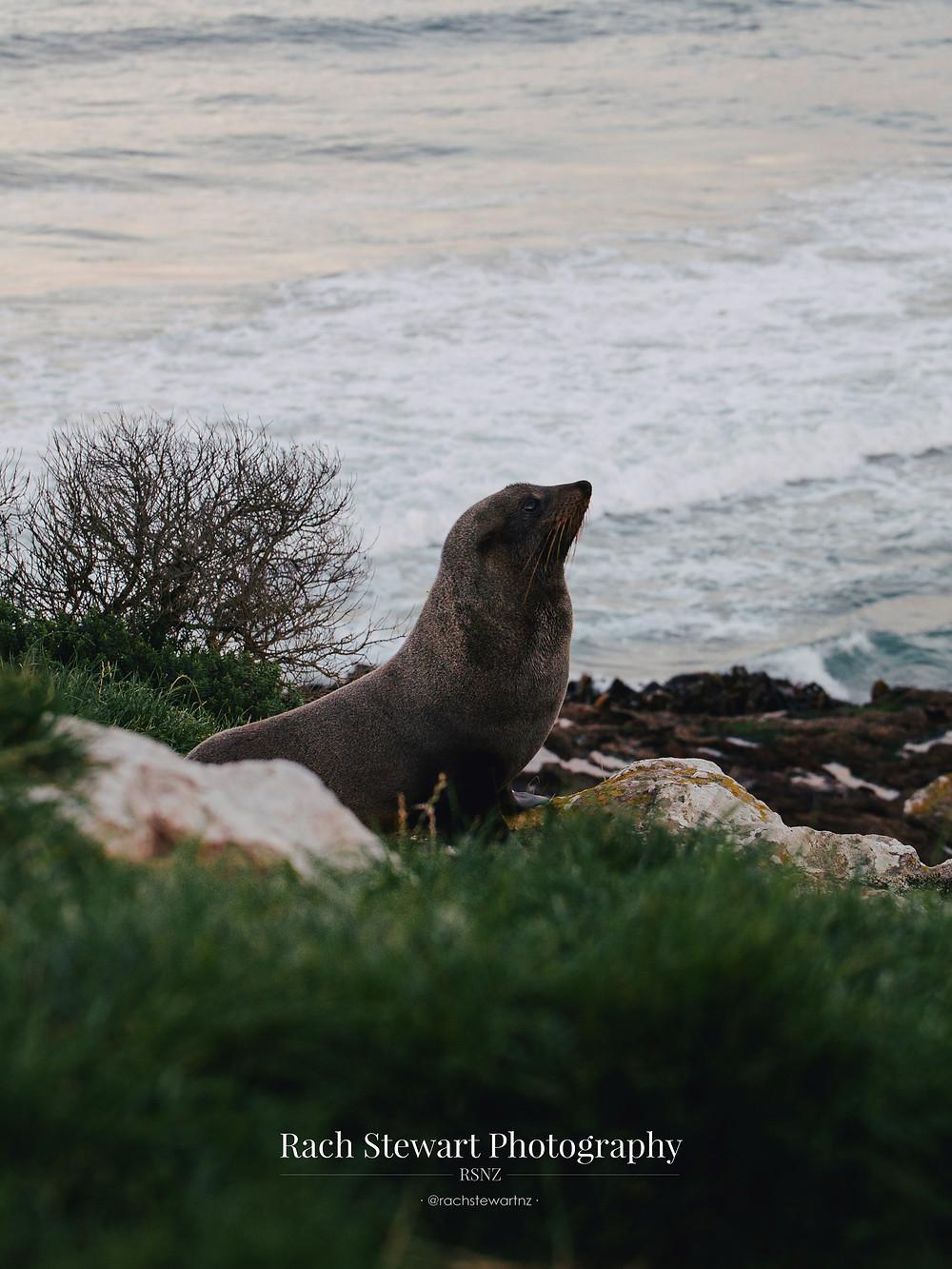 Wildlife Dunedin