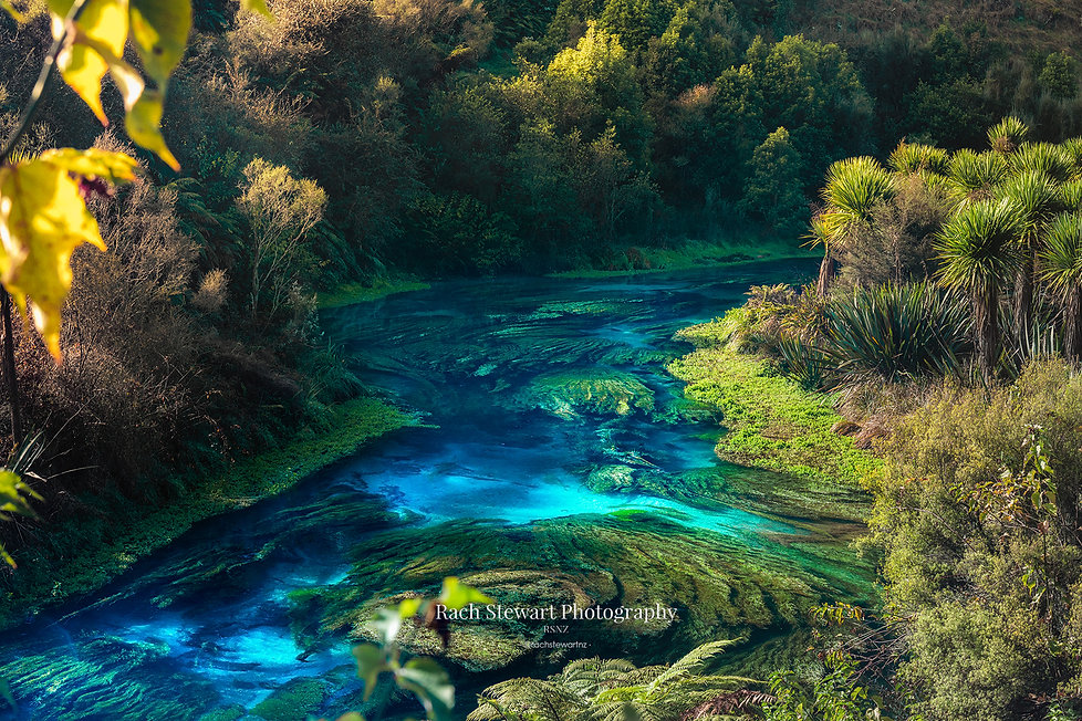 Putaruru Blue Springs