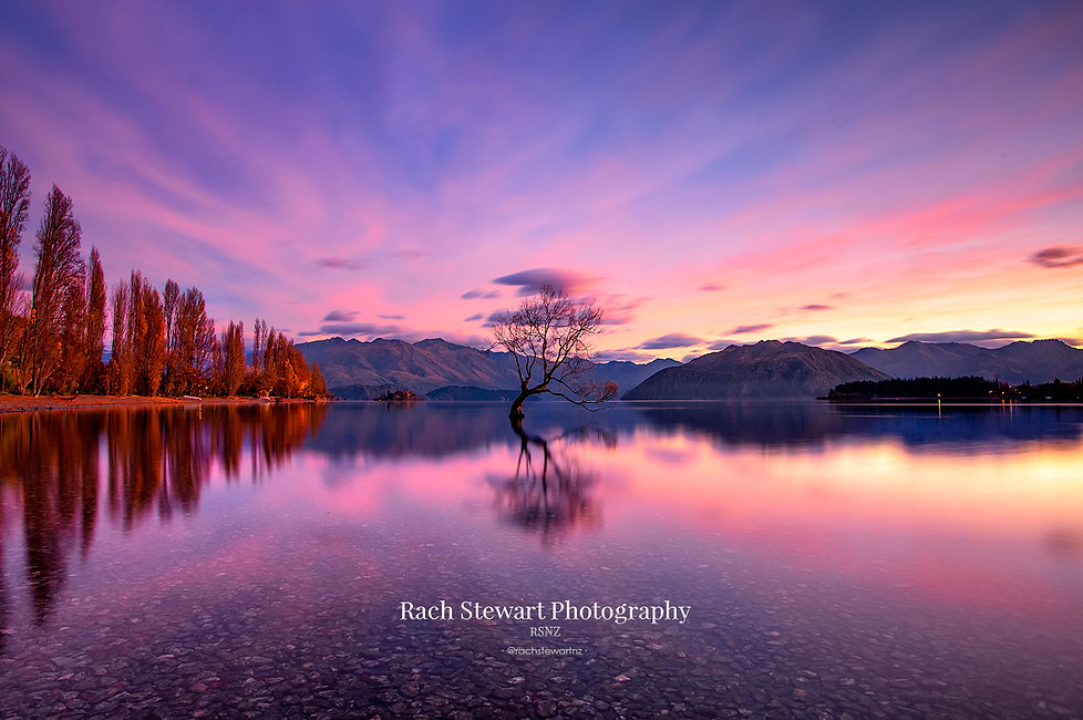 Sunrise Wanaka Tree reflection