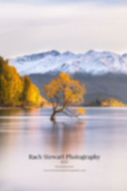 Wanaka tree sunrise Autumn