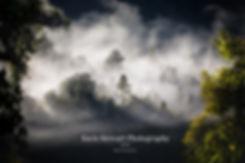 West coast fog trees new zealand photographer