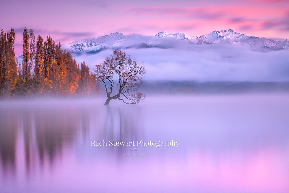 Wanaka Tree Sunrise