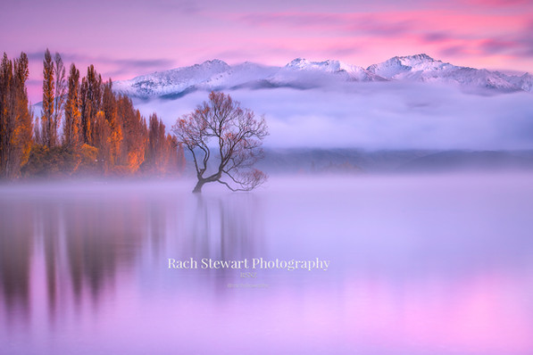 Wanaka Tree sunrise mist