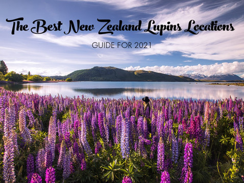 THE BEST NEW ZEALAND LUPIN LOCATIONS GUIDE 2021