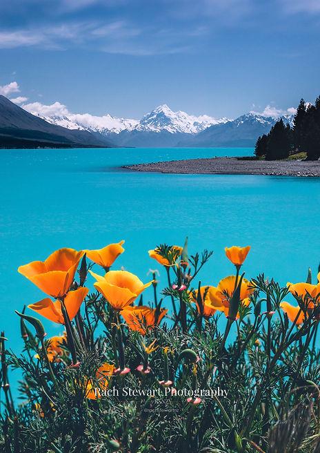 Lake Pukaki Mount Cook Poppies