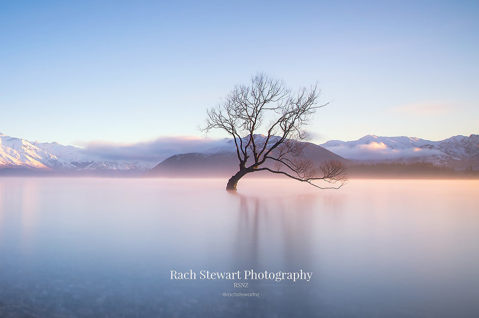 Wanaka Tree sunise winter