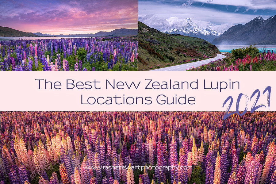 Best New Zealand Lupin Guide