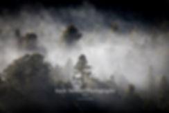 West coast fog Fox Glacier