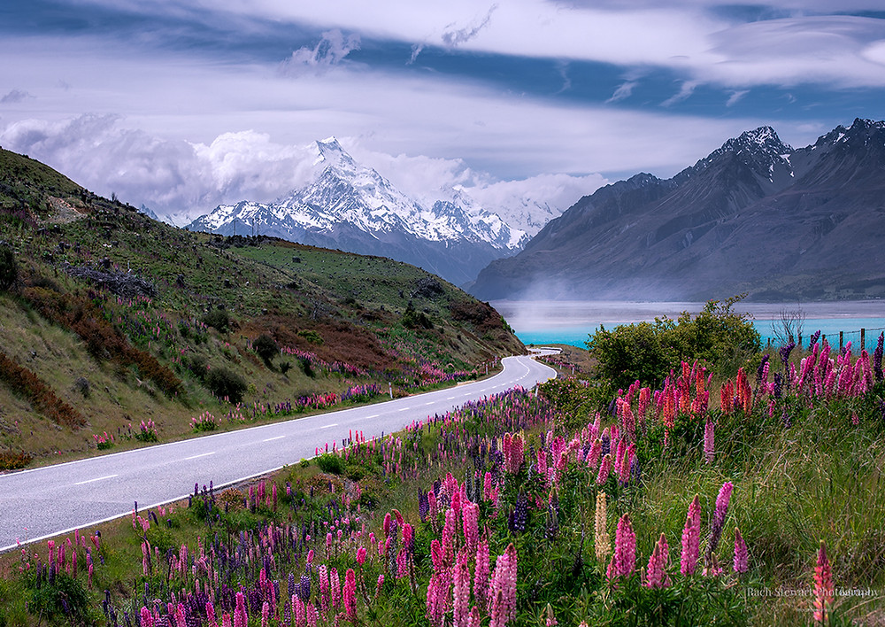 Mount Cook lupins New Zealand